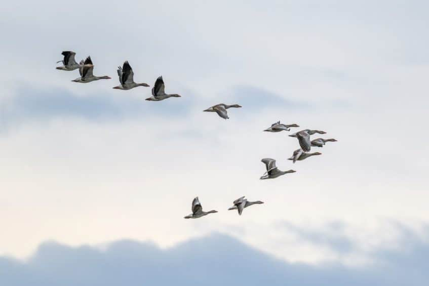 Overview of Unily Migrations