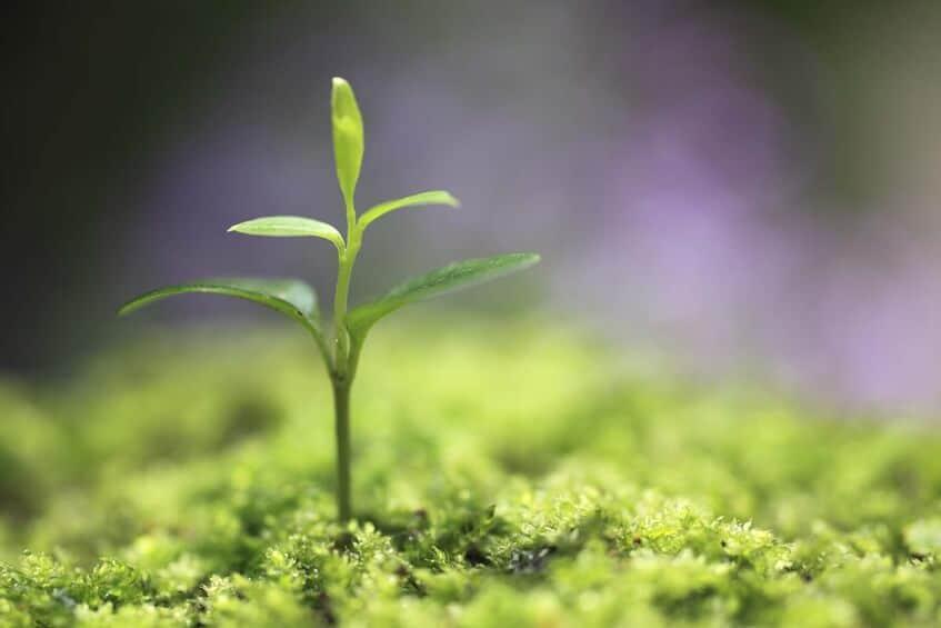 growth-forest.jpg